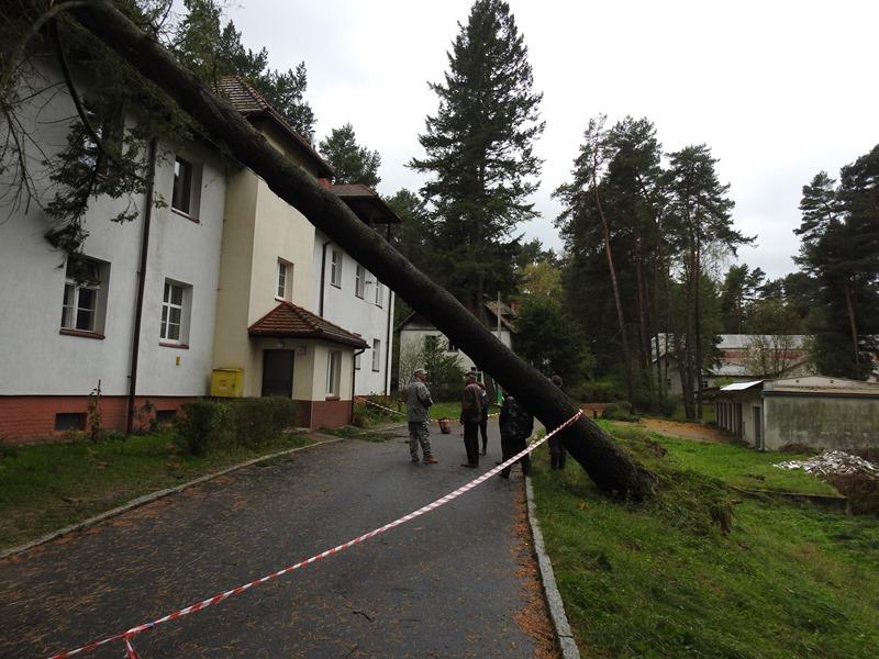 Ilustracja do informacji: Gmina Międzyrzecz po przejściu orkanu Ksawery