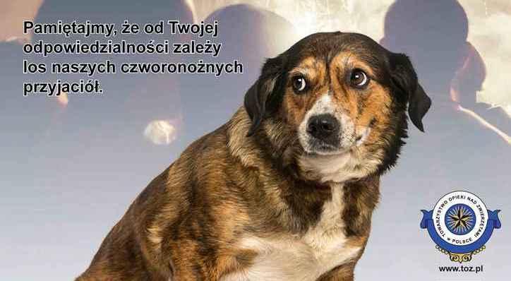 Ilustracja do informacji: Pamiętajcie o swoich zwierzakach podczas zabaw sylwestrowych!