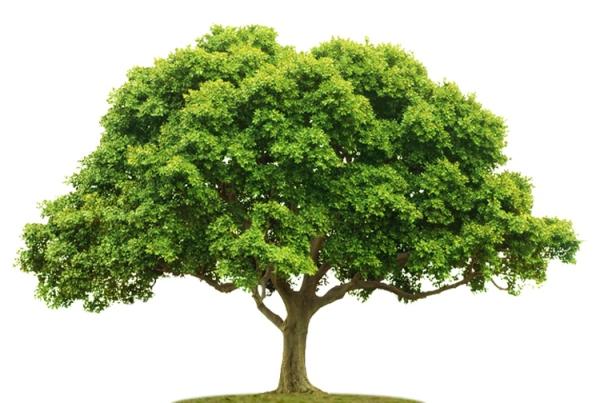 Ilustracja do informacji: Drzewa w otwartym krajobrazie – instrukcja obsługi