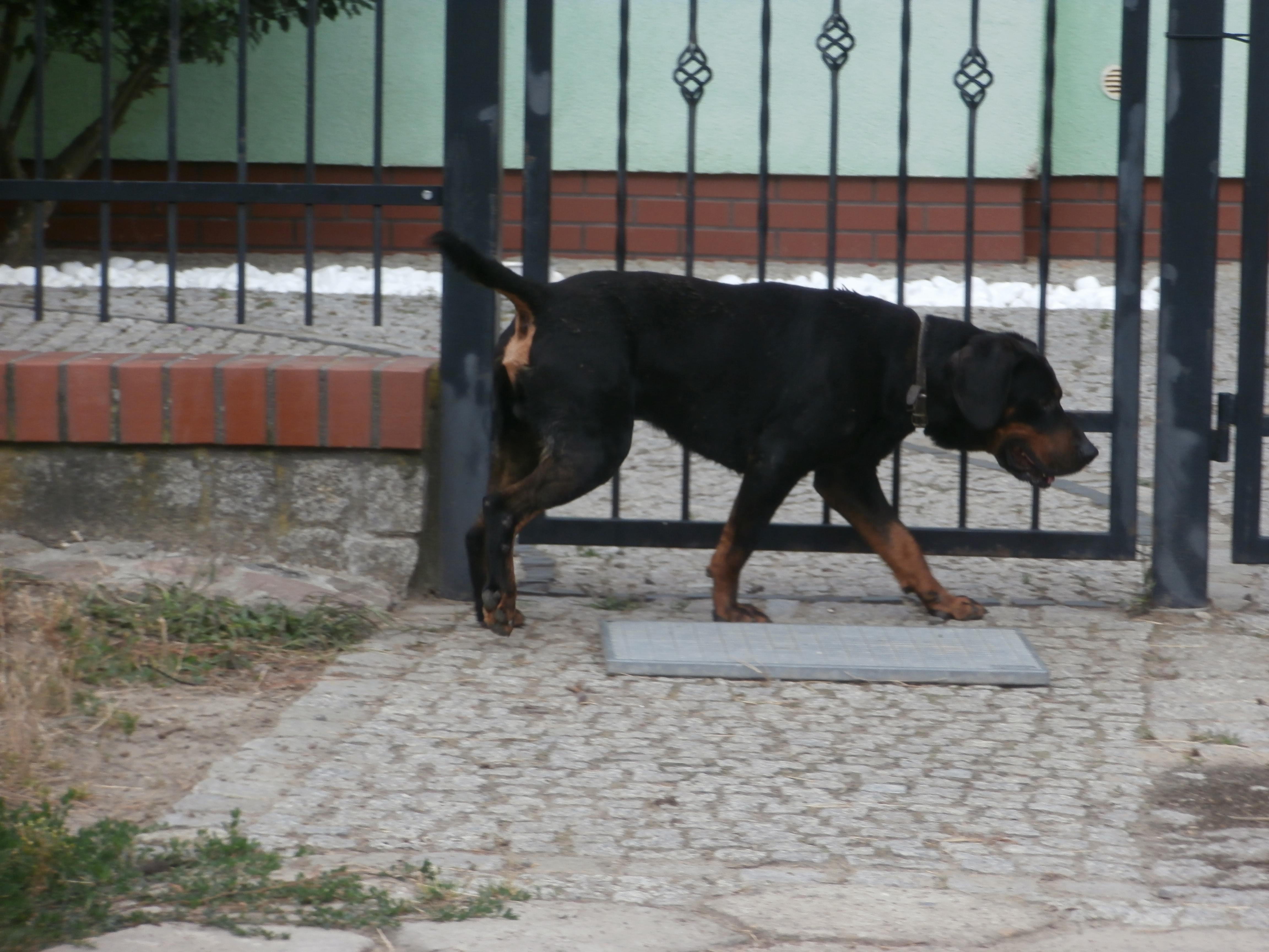 Ilustracja do informacji: Szukamy właściciela psa