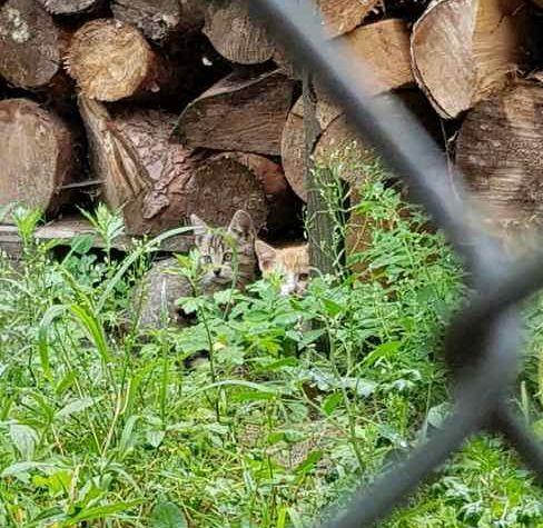 Ilustracja do informacji: Trzy małe kotki szukają nowych domów!