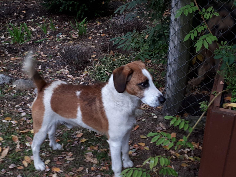 Ilustracja do informacji: Pies czeka na właściciela
