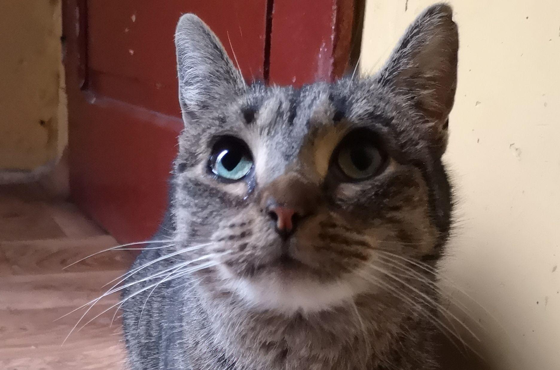 Ilustracja do informacji: Szukamy domu dla kociaka-słodziaka