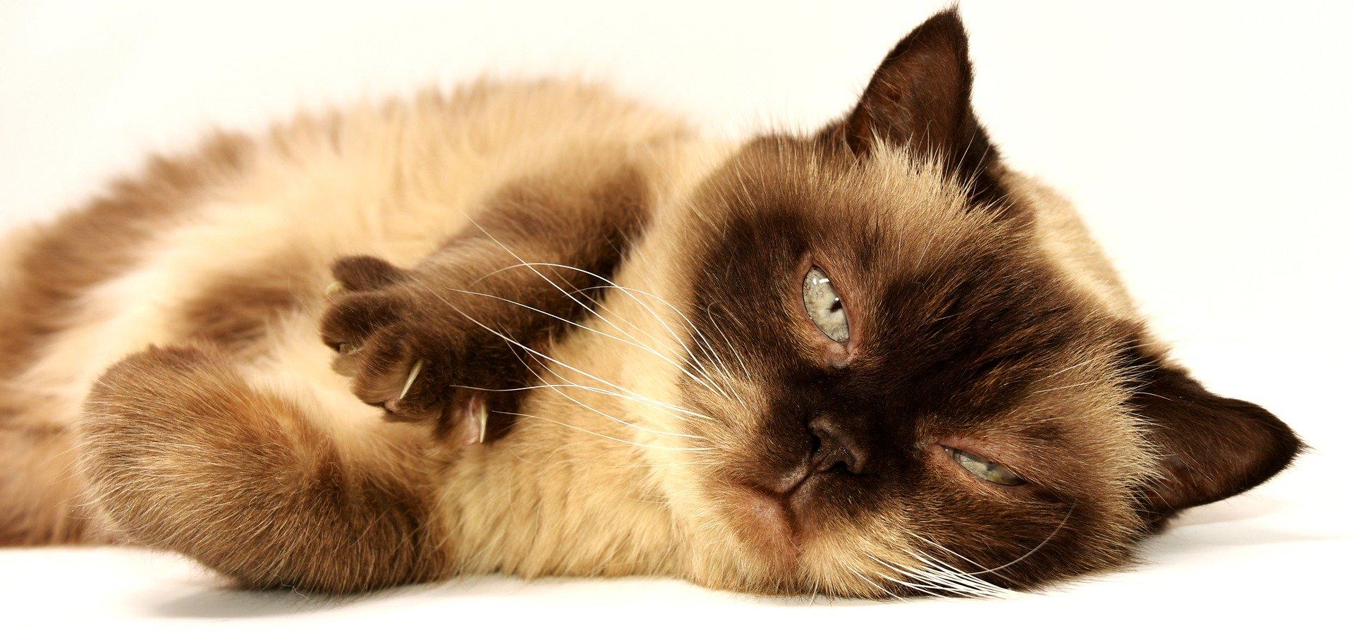 Ilustracja do informacji: Uwaga, informacja dla właścicieli kotów