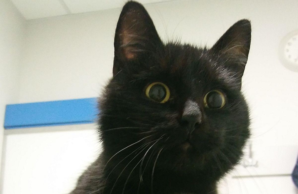 Ilustracja do informacji: Szukamy domu dla kotki