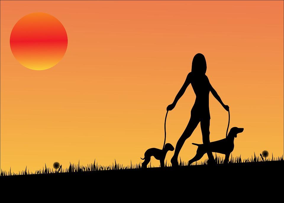 Ilustracja do informacji: Apel do właścicieli psów