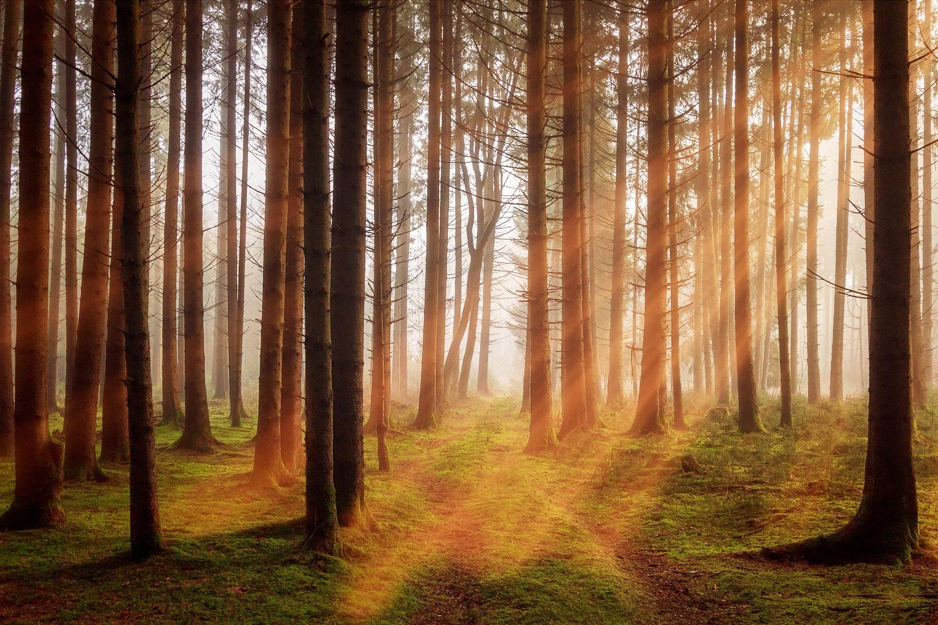 Ilustracja do informacji: Ostrzeżenie o zagrożeniu pożarowym w lasach