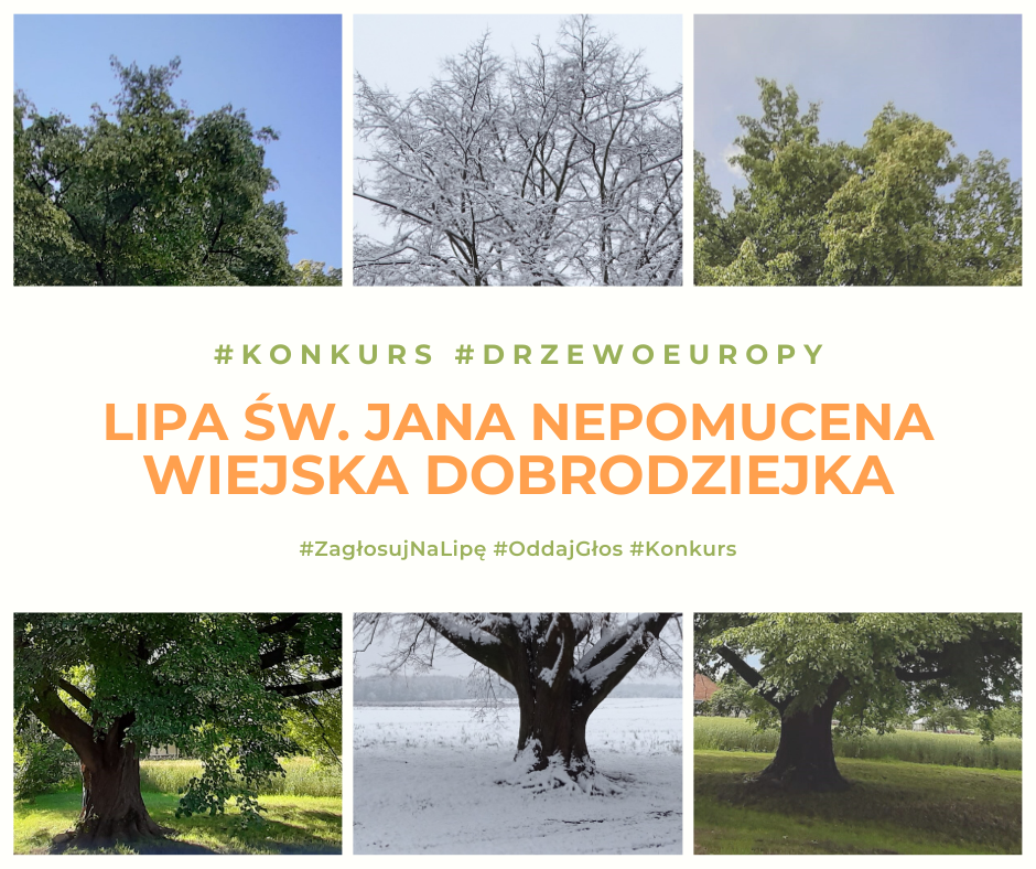 Ilustracja do informacji: Konkurs na Europejskie Drzewo Roku