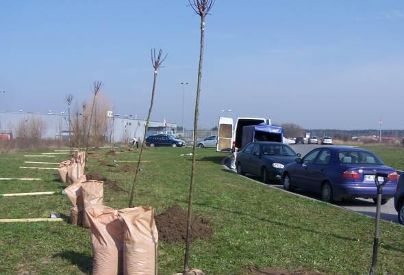 Ilustracja do informacji: Zasadziliśmy nowe aleje drzew w Międzyrzeczu